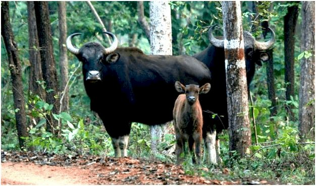 Baranavapara Wildlife Sanctuary